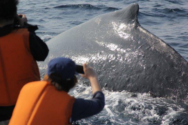 【美ら海水族館から約10分♫本部発】ホエールウォッチングツアー<13:30発>