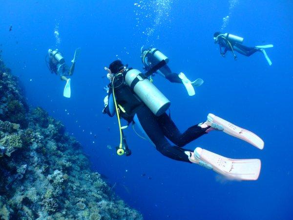 3つのポイントを廻る慶良間諸島終日体験ダイビング