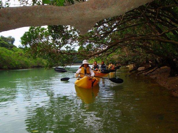 【比謝川を探検する小さな冒険!嘉手納発】 比謝川マングローブ探検カヤック