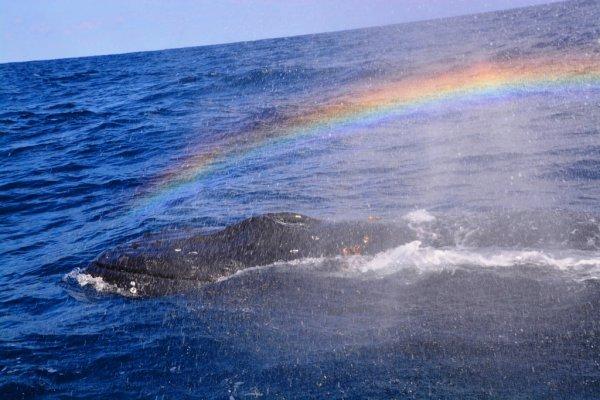 【美ら海水族館近く!】特典満載!ホエールウォッチング&シーウォーカー